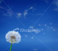 ist2_3709702_wishes1.jpg